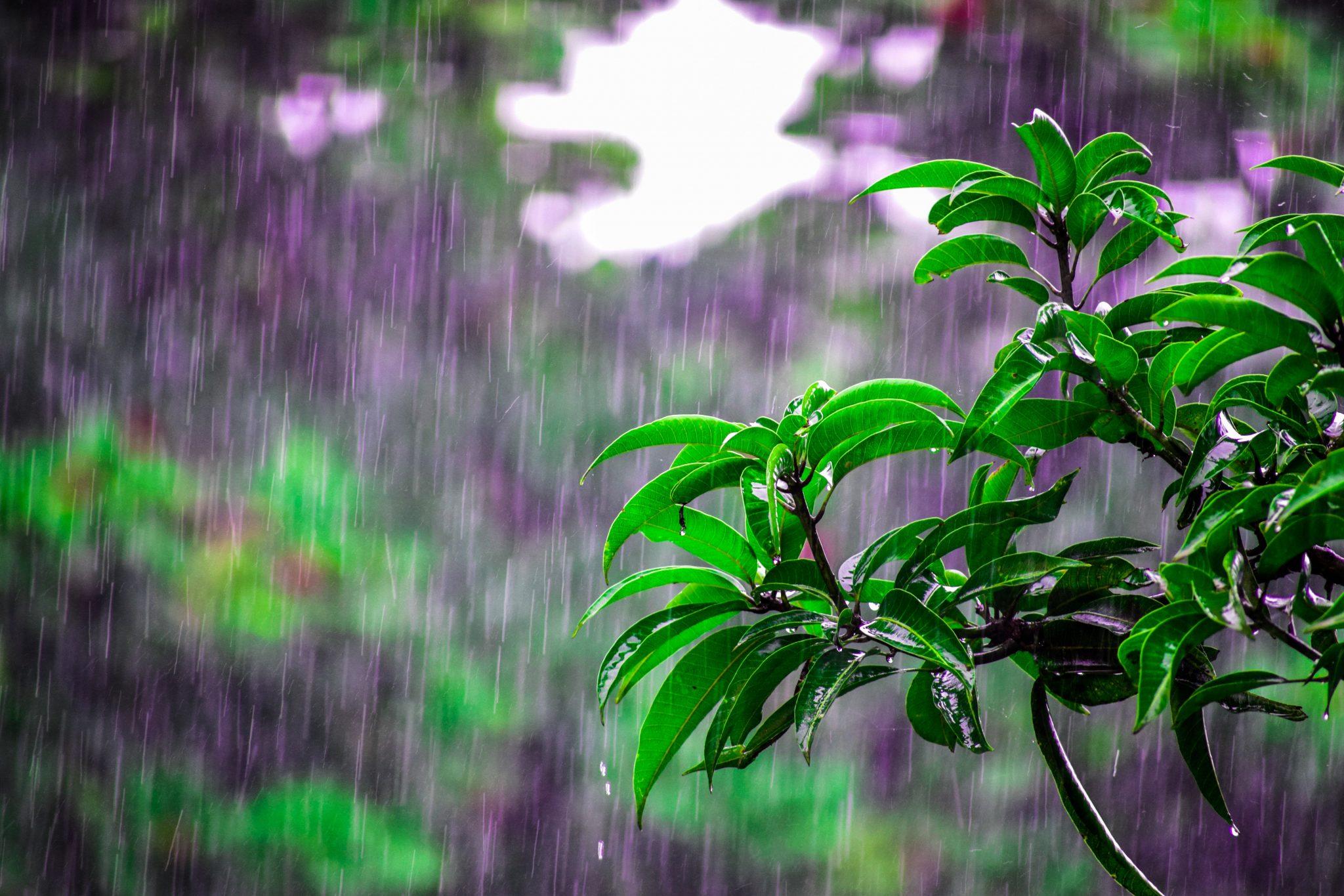 Wet Weather Walking Guide